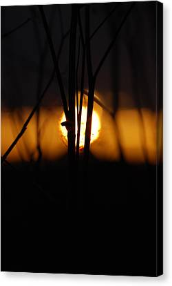 Canvas Print featuring the photograph Glowing Lace by Jani Freimann