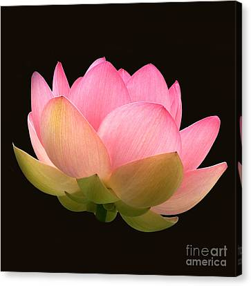 Glowing Lotus Square Frame Canvas Print
