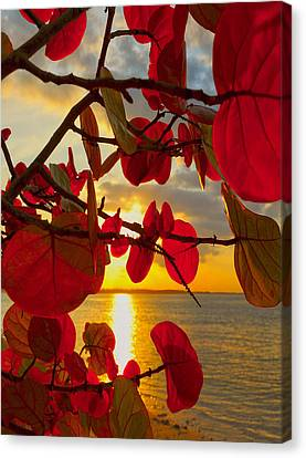 Red Leaf Canvas Print - Glowing Red by Stephen Anderson