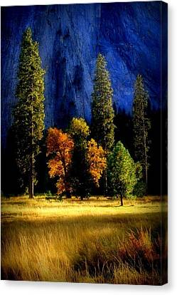 Glowing Trees Canvas Print