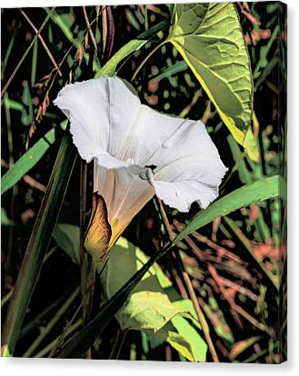 Canvas Print featuring the photograph Glowing White Flower by Leif Sohlman