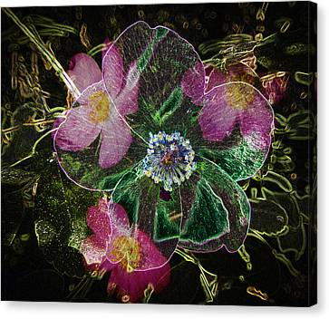 Glowing Wild Rose Canvas Print
