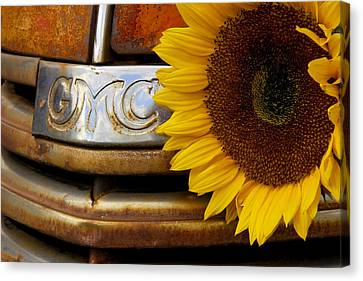 Gmc Sunflower Canvas Print by Steven Bateson