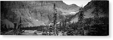 Gnarled Pines Canvas Print