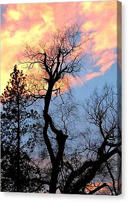 Gnarled Tree Silhouette Canvas Print by Will Borden