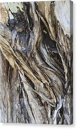 Gnarly Canvas Print by AnnaJo Vahle