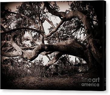 Gnarly Limbs At The Ashley River In Charleston Canvas Print by Susanne Van Hulst