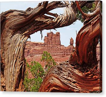 Canvas Print featuring the photograph Gnarly Tree by Alan Socolik