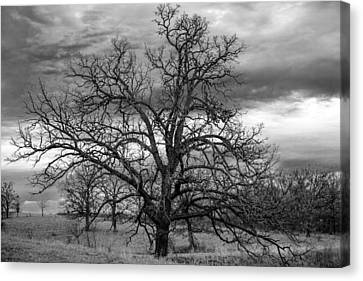 Canvas Print featuring the photograph Gnarly Tree by Sennie Pierson