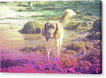 Beach Theme Decorating Canvas Print - One Day Wil Will Go Hunting For Something Valuable  by Hilde Widerberg