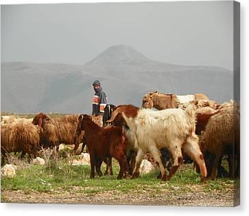 Goat Herder In Jordan Valley Canvas Print by Noreen HaCohen