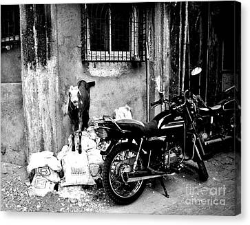 Goatercycle Black And White Canvas Print