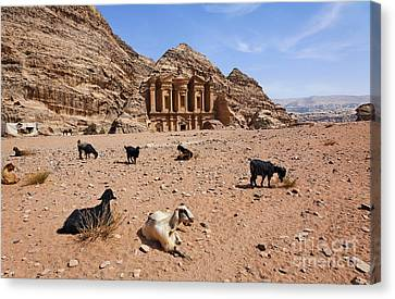 Goats In Front Of The Monastery At Petra In Jordan Canvas Print