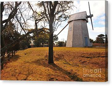 Godfrey Windmill Canvas Print by Catherine Reusch  Daley
