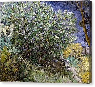 Nederland Canvas Print - Gogh, Vincent Van 1853-1890. Lilac by Everett