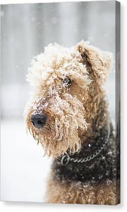 Dog's Portrait Under The Snow Canvas Print