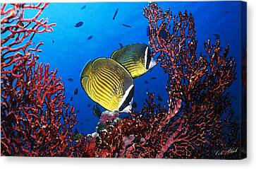 Going For A Swim Canvas Print by Cole Black