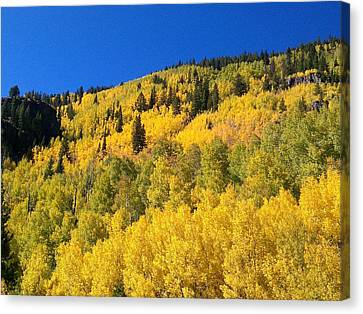 Canvas Print featuring the photograph Going Gold by Fortunate Findings Shirley Dickerson