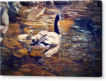 Mother Goose Canvas Print - Going Home by Maria Angelica Maira