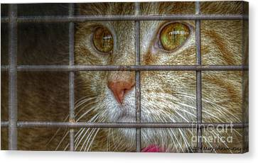 Mary King Canvas Print - Going Home by Mary  King