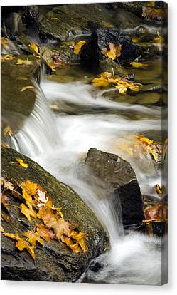 Going With The Flow Canvas Print by Christina Rollo