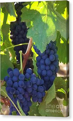 Golan Grapes Canvas Print