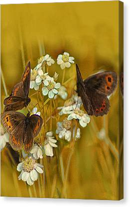 Gold And Brown Canvas Print by Jacqi Elmslie