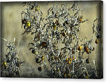 Canvas Print featuring the photograph Gold And Gray - Silver Nightshade by Nadalyn Larsen