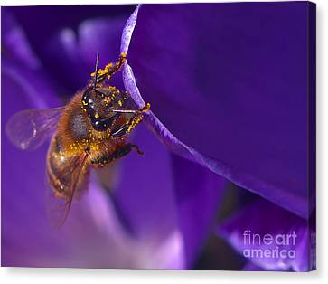 Gold Dust Canvas Print by Sharon Talson