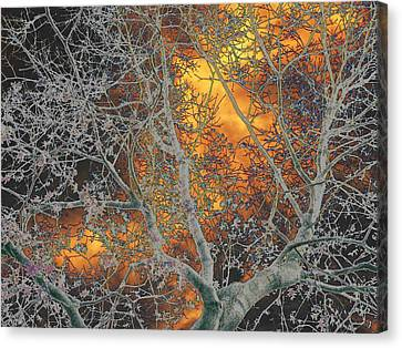 Gold In The Midst Of Winter Canvas Print