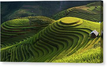 Shed Canvas Print - Gold Rice Terrace In Mu Cang Chai,vietnam. by Artistname