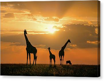 Golden Africa Canvas Print
