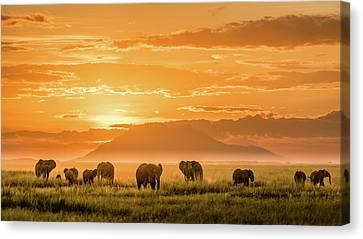 Elephants Canvas Print - Golden Africa by John J. Chen
