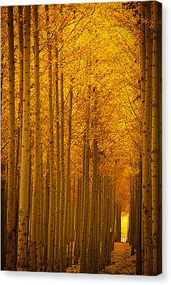 Golden Alley Canvas Print by Dan Mihai