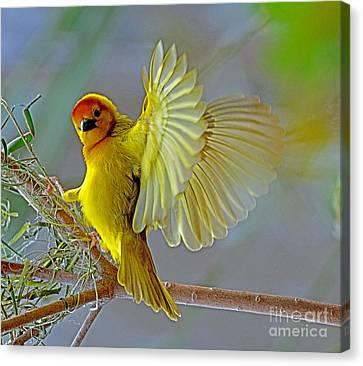 Golden Angel Canvas Print