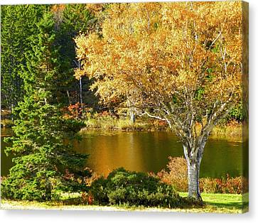 Canvas Print featuring the photograph Golden Autumn by Gene Cyr