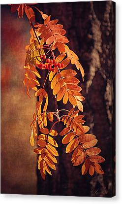 Golden Autumn Leaves  Canvas Print by Maria Angelica Maira