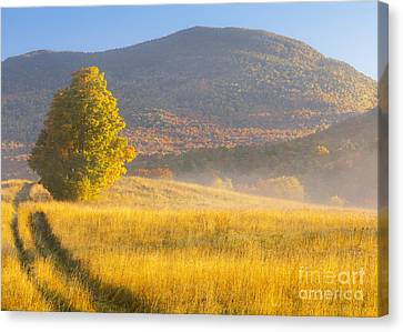 Golden Autumn Morning Canvas Print