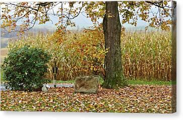 Cornfield Canvas Print - Golden Autumn by Sherry Brant