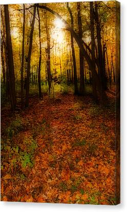 Golden Autumn  Canvas Print by Susan  McMenamin