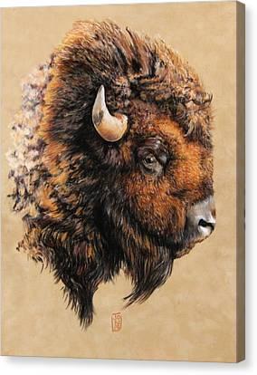 Golden Bison Canvas Print by Debra Jones