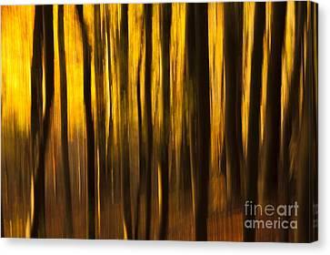 Golden Blur Canvas Print by Anne Gilbert
