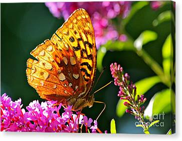 Golden Butterfly Canvas Print