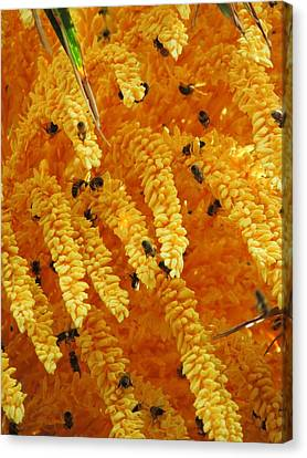 Golden  Buzz Canvas Print
