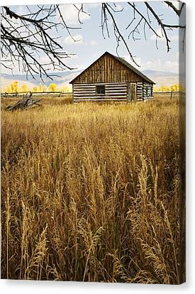 Canvas Print featuring the photograph Golden Cabin by Sonya Lang