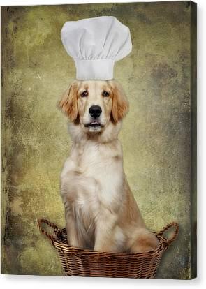 Golden Chef Canvas Print by Susan Candelario