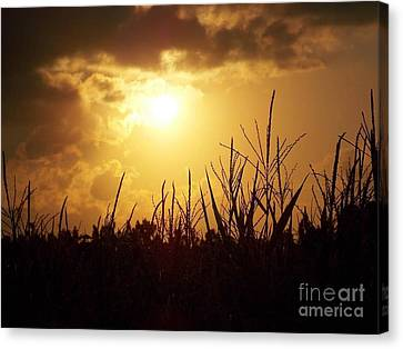 Golden Clouds Of Hope Canvas Print by Matthew Seufer