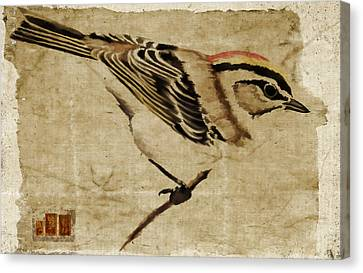 Golden-crowned Kinglet Canvas Print by Carol Leigh