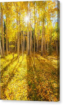 Fall Leaves Canvas Print - Golden by Darren  White