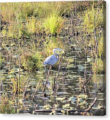 Golden Day Of The Great Heron Canvas Print by Maria Urso